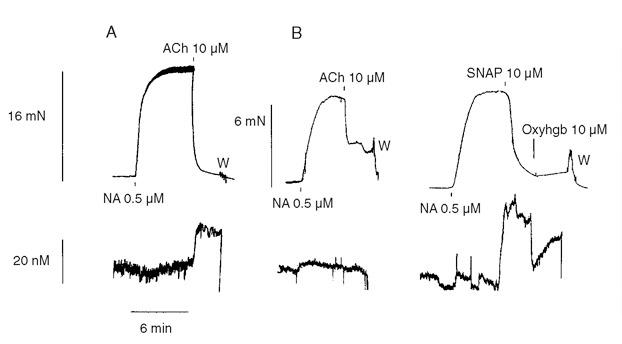 Nitric Oxide Sensor-changes of NO concentration
